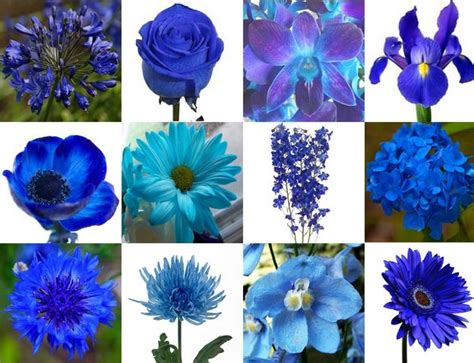 types of blue flowers for weddings www pixshark com images galleries with a bite