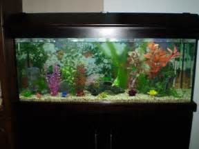 Tropical Fish Tanks   Page 16