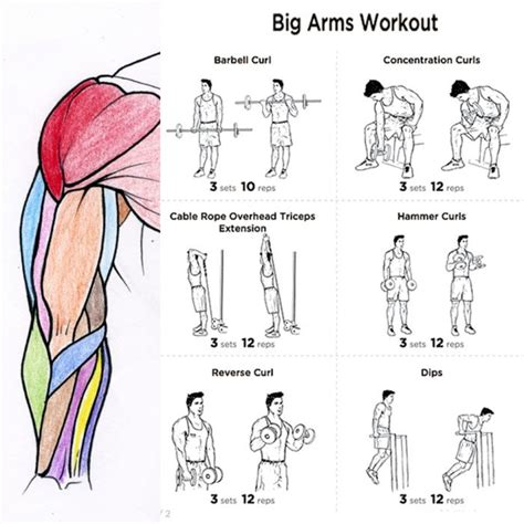 best exercises for big biceps best biceps workout for big arms workout plan fitness health routine bicep