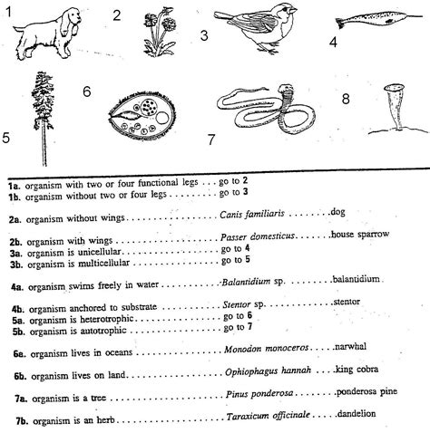 Taxonomy Classification And Dichotomous Worksheet Answers by Image Gallery Dichotomous Key