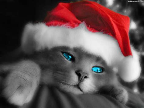 blue eyed cats inspiration photos