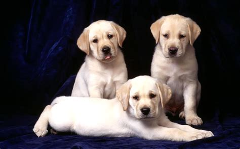 sweet dogs image gallery sweet dogs