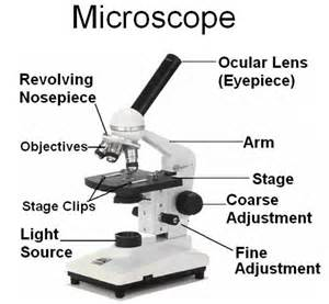 guide to using a mircoscope jess r