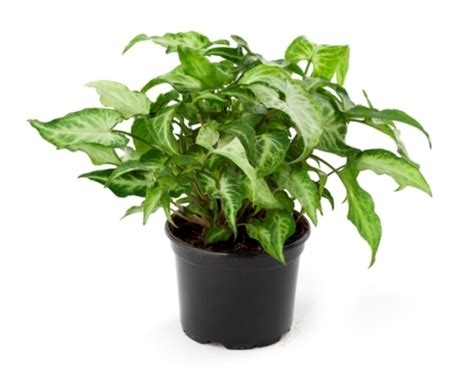 best indoor plants for no sunlight love plants but no sunlight these plants can be your