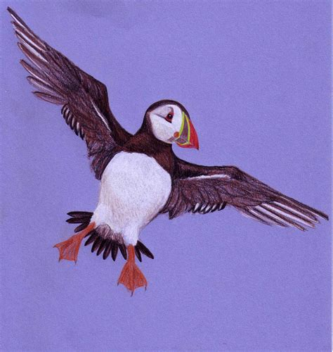 all about puffins lynne rickards author