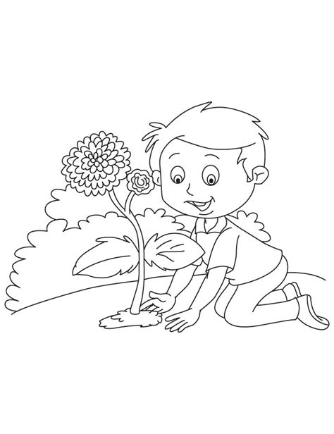 planting chrysanthemum coloring page download free