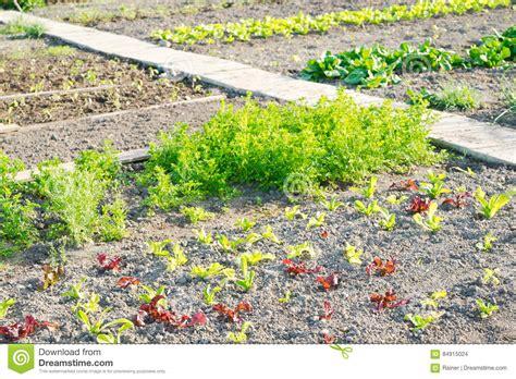 organic gardening tips growing vegetable gardens on