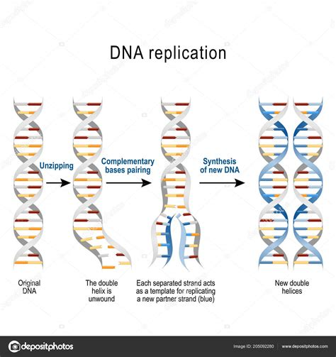 what is a template in dna what acts as the template in dna replication xors3d