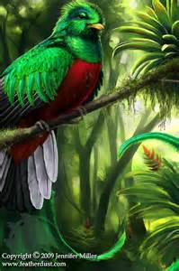 Plants That Live In The Tropical Rainforest Biome - tropical rainforest biome plants and animals