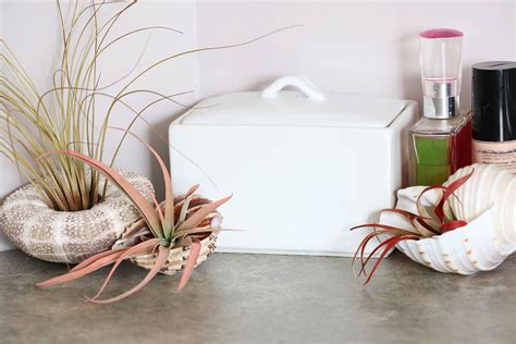 air plants bathroom bathroom makeover