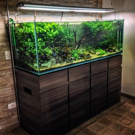 aquascape designs inc 13362 best aquascape images on pinterest