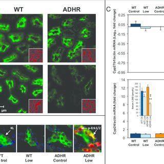 (pdf) iron deficiency drives an autosomal dominant