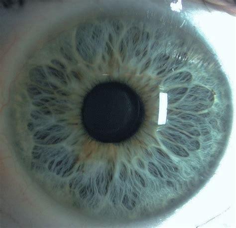 eye pattern pinterest my iris eye iris blue pretty patterns photography