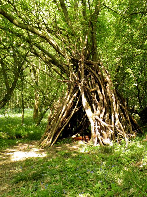 Cool House Pictures woodland den rushbeds wood buckinghamshire 4th may