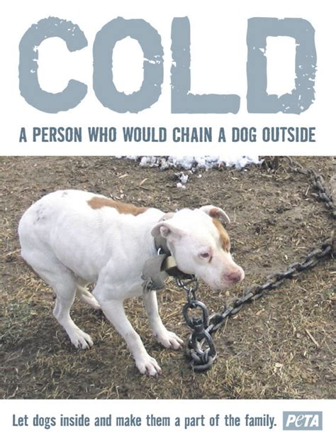 when can puppies go outside cold a person who would chain a outside the city sentinel