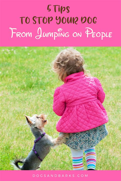 how to stop a dog from jumping on the couch 5 tips to stop your dog from jumping on people dogs and bark