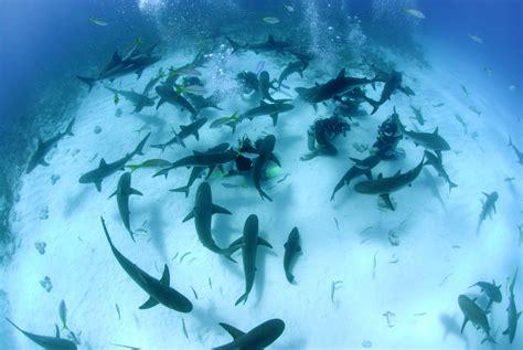 dive shark scuba diving stuart cove s