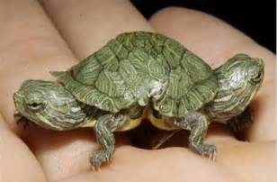 Cute tiny baby turtles baby animal pictures