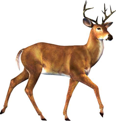 deer images deer png images free deer png