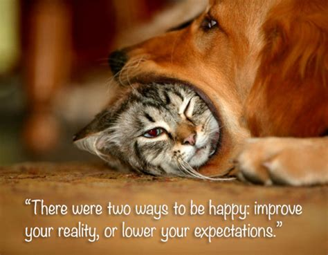 the lincoln chronicles puppy wisdom for happy living books motivational cat quotes quotesgram