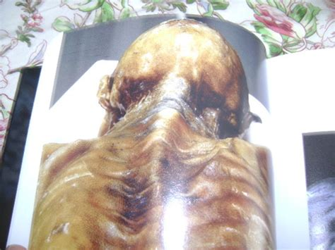 skin a natural history nina g jablonski 9780520242814 amazon skin a natural history nina g jablonski 9780520242814