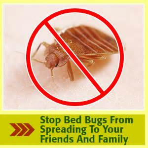 boric acid for bed bugs inspiration how to kill bed