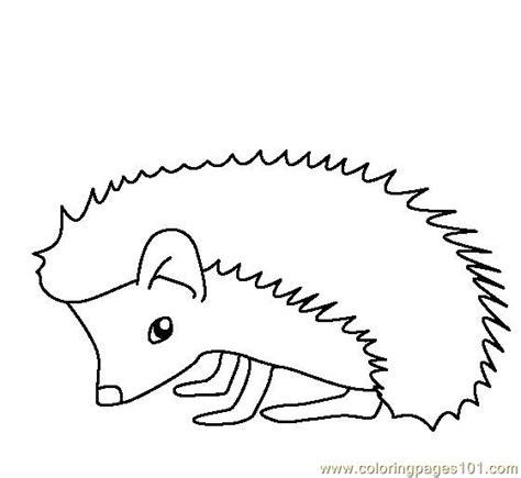 coloring page of a hedgehog hedgehog printable coloring pages