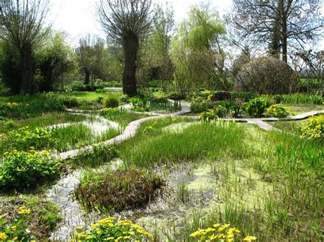 The Bog Garden by Where The Cuckoo Can Be Heard All Year In Herefordshire Grows On You