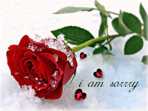 Wonderful Christmas Song Submission #5: Sorry-With-Beautiful-Ice-Rose-Image.gif