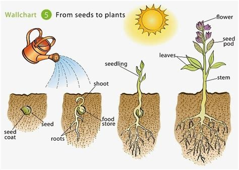 Did K Fed Plant One Last Seed by Growing Beans Islam From The Start