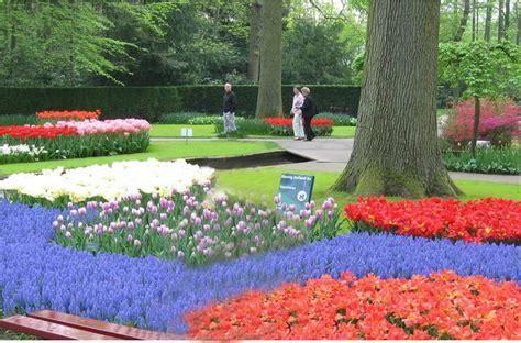 wallpaper bunga tulip di belanda taman bunga tulip di belanda property 96
