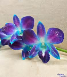 Wholesale Hawaiian Flowers - purple dendrobium orchids these dendrobium orchids are