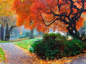 fall landscape amazing color for the fall landscape landscaping ideas