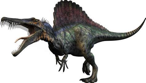 spinosaurus dinosaur wiki fandom powered by wikia