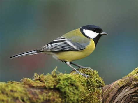 How To Keep Birds Patio by Common Garden Birds Saga