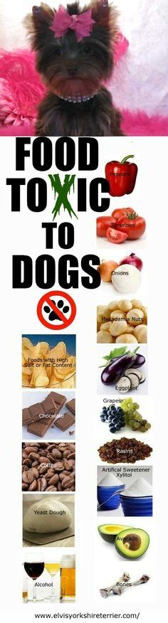 foods toxic to dogs health on chakras chakra and scoliosis