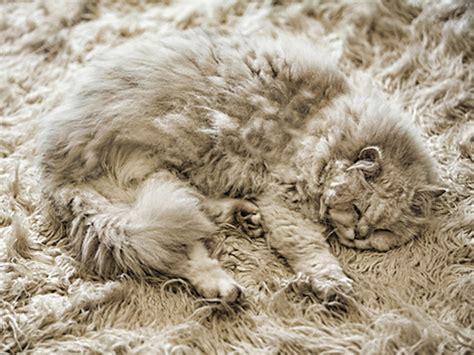 Karpet Getah kumpulan media karangkraf
