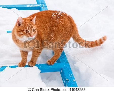 stock images of red cat walking in the snow little red