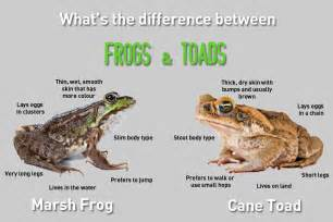 frogs and toads easy science kids hidden words game free