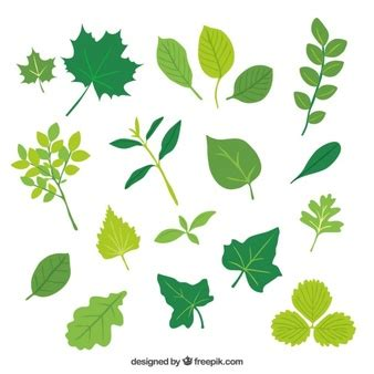 Leaf Daun Paper Flower Isi 12 Pcs leaf vectors photos and psd files free