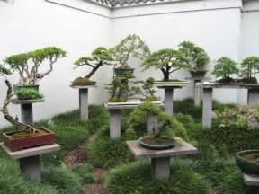 patio gardens best 25 bonsai garden ideas on bonsai give