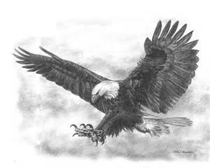 17 best ideas about eagle drawing on pinterest eagle art