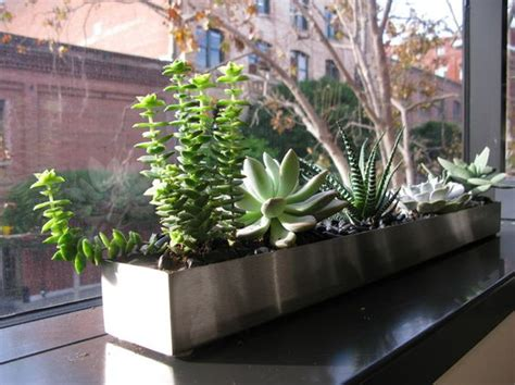 indoor windowsill planter trough windowsill planter w succulents decorating w houseplants pinterest gardens