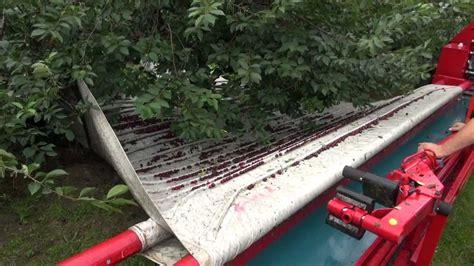 dawson v cherry tree machine maja cherry harvesting agregat otrząsająco czyszczący do wiśni i śliw