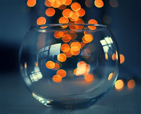 20 incredible images of bokeh photography
