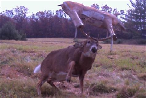10 funny trail cam photos