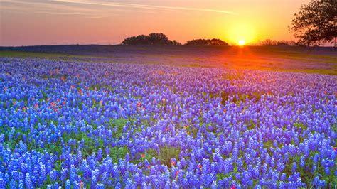 Sunflower Field flower meadow 5455 1920 x 1080 wallpaperlayer com