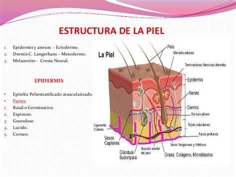 la piel de la fisiologia de la piel
