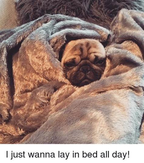 laying in bed all day 25 best memes about laying in bed all day laying in bed