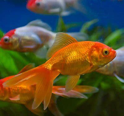aquarium water care for healthy fish tanks | petsmart